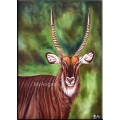 Deer Oil Paintings