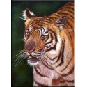 Tiger Oil Paintings